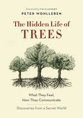Cover image for Hidden Life of Trees