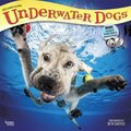 Cover image for 2018 Underwater Dogs Square Calendar