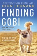 Cover image for Finding Gobi
